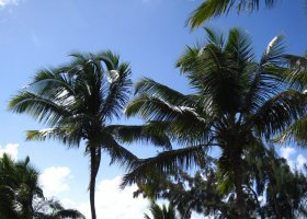 reunion-a-mauritius-cerven-2011-022.jpg