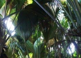 seychely-duben-a-kveten-2011-001.jpg