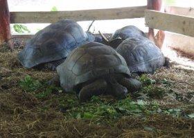 seychely-duben-a-kveten-2011-004.jpg