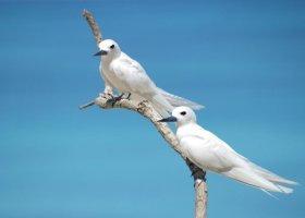 seychely-hotel-bird-island-023.jpg