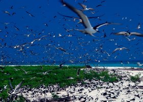 seychely-hotel-bird-island-050.jpg