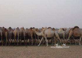 spojene-arabske-emiraty-cerven-2009-036.jpg