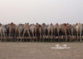 spojene-arabske-emiraty-cerven-2009-037.jpg