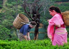 sri-lanka-hotel-heritance-tea-factory-036.jpg