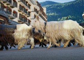 svycarsko-hotel-mont-cervin-palace-083.jpg