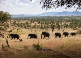tanzanie-hotel-four-seasons-serengeti-046.jpeg