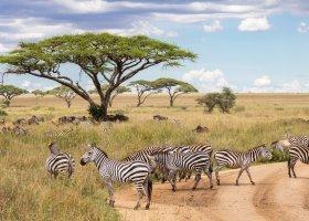 tanzanie-hotel-melia-serengeti-lodge-048.jpg