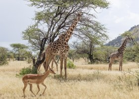 tanzanie-hotel-melia-serengeti-lodge-143.jpg