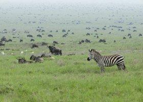 tanzanie-hotel-serengeti-sopa-lodge-014.jpg