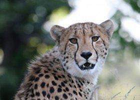 tanzanie-hotel-serengeti-sopa-lodge-015.jpg