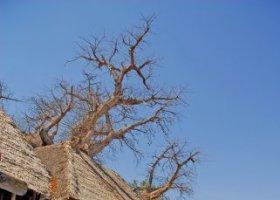 tanzanie-hotel-tarangire-treetops-015.jpg