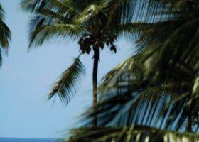 zanzibar-hotel-diamonds-mapenzi-beach-181.jpg