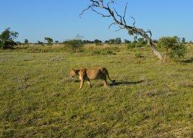 zimbabwe-a-botswana-dve-perly-v-africe-007.jpg