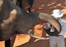 zimbabwe-hotel-elephant-camp-004.jpg