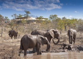zimbabwe-hotel-elephant-camp-012.jpg