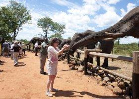 zimbabwe-hotel-elephant-camp-015.jpg