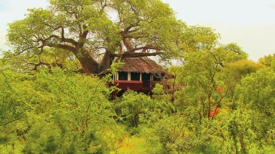 Tarangire Treetops *****