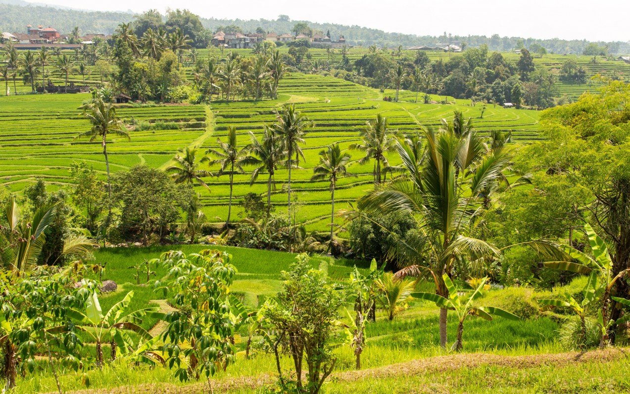Bali, ostrov Bohů a Lombok