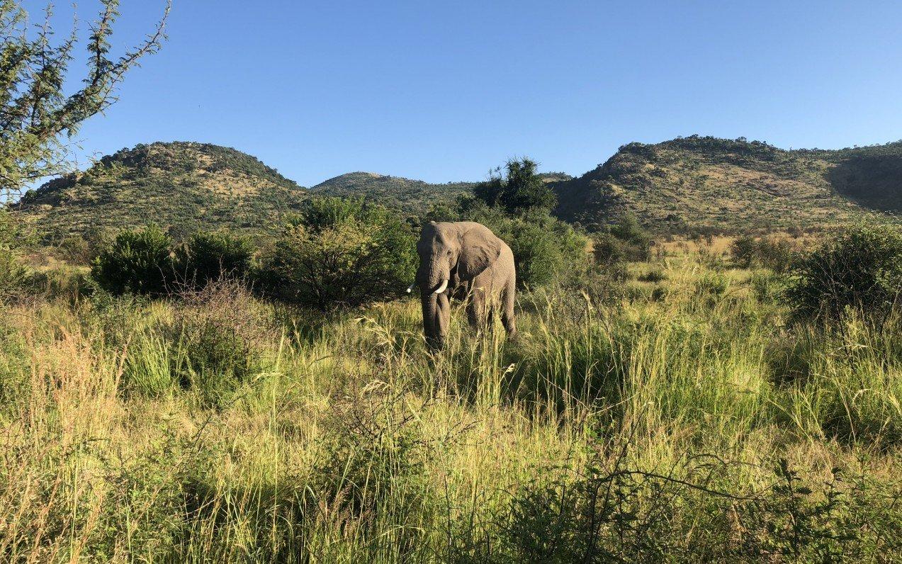 Jihoafrická republika - cesta nabitá neuvěřitelnými zážitky