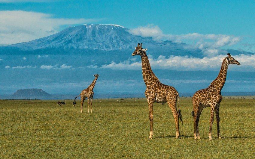 Cena safari zájezdů do Afriky